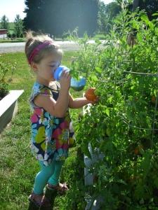 L multitasks while picking tomatoes