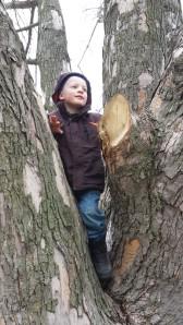 G climbs trees